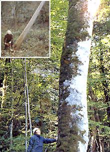 細川木材㈱